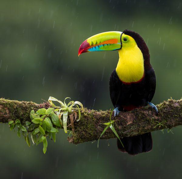Diagnóstico y apoyo en la revisión de procesos de medición de la actividad turística – Costa Rica